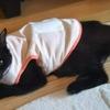 扁平上皮癌になった愛猫を、天にお返しした⑨