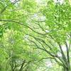 愛知県森林公園のさわやかな新緑の森