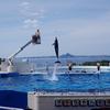初沖縄旅行『初めての沖縄県 美ら海水族館(Prat 2)』イルカショーでかい(日常)