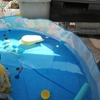 【超便利】空気入れ不要の家庭用プール!準備も片付けもラクチンだから、子どもと夏はプールで遊びまくり!タープテントがあれば日よけもバッチリ!