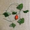 2-205   真っ赤な烏瓜