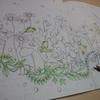 プリズマカラー色鉛筆でアマガエルを塗ってみました・幸せのメヌエットより