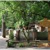 緑豊かなオランダの動物園(DierenPark Amersfoort)に日本の動物がいた!2泊3日のオランダ旅行記③