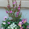 12月19日 お花の写真放出