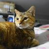 6月後半の #ねこ #cat #猫 どらやきちゃんA