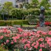 【文京区】本郷給水所公苑のバラが満開です