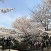皇居ランと桜とたい焼きと