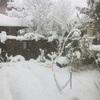 雪国をウン十年振りに感じる光景