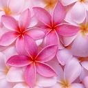 mauve-pink's blog