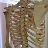 デスクワークの方、骨の歪みの原因は??