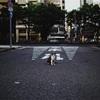 17.5㎜ F0.95一本で野良猫撮影