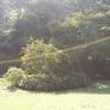小山田緑地の倒木