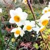 花の咲く時季は何を暗示するのか