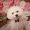 ~迷子札・大切な愛犬のために~