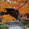 常寂光寺に行く!京都紅葉ぶらり巡り 2020年嵐山③