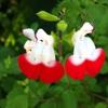 花の色の説明