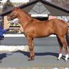 2022年新種牡馬:マインドユアビスケッツ