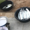 チャイヤプルク早朝魚売り場