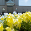 DXO ONEで春の昼下がり