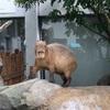 アクア・トトぎふ モノクロの世界の水族館 お好みの生き物いますか?