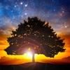 魂の成長だけがこの世を生きる目的なんだよ