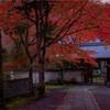 京都・鷹峯 - 深紅のカエデに包まれる吟松寺