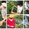 第4回ー夏休み校外学習ー@宝塚西谷地区でお借りしている畑