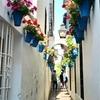 【スペイン旅行】コルドバ:アンダルシア唯一のシナゴーク、周辺のユダヤ人街を散策。