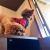 合体犬と背徳ラーメン