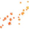 11月23日は「紅葉ピリカ!」