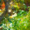 梅の花咲く春の音 聞きて草花共に咲き祝う