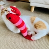 お耳掃除、トイレ掃除などなど…愛猫のお世話に精が出る月末