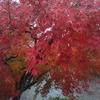 家の近くで楽しめる紅葉、黄葉、金葉