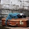 旅行に行くときの荷物の量を減らした結果、残ったもの