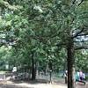 大田区 『平和の森フィールドアスレチック』