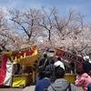 桜が満開の三島大社でお参りした。