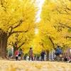 【2018年】東京大学本郷キャンパスの銀杏並木が見頃です