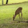 コロナ禍明けの奈良公園へ。小鹿の様子を見に若草山に登ってみた。