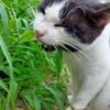【農㉖】畑と猫と。