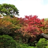 大河内山荘の紅葉を見に行く②観光98...20201108京都