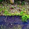 密かにと賑わう雑草たちと 雑草アンテナ