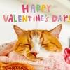 バレンタインデーは大好きなあの子に焼きカツオを。