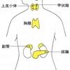 じじぃの「科学・芸術_418_内臓の進化・ホルモン」