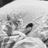 アトピー向け「ライナスの毛布」はこれだ!