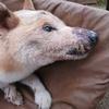老犬看護・老犬のケア。
