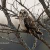 2020年1月19日の鳥撮り(2/2)-千葉県我孫子市