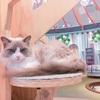 【もふもふパラダイス】越谷レイクタウンに2017年10月オープンの猫カフェに行ってきた