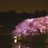 千鳥ヶ淵の夜桜と近所の桜をカメラに撮る!