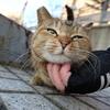 2月後半の #ねこ #cat #猫 その2