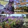 秋晴れの祝日に舎人公園でランチ
